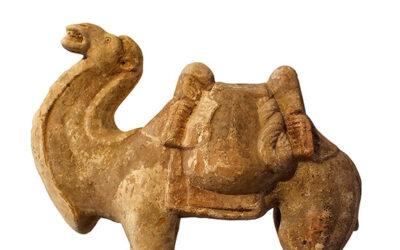 Fine Bactrian Camel