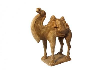 Fine Bactrian Camel (5)