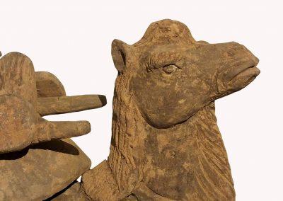 Rare Bactrian Camel (2)