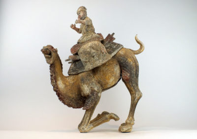 Extremely Rare Bactrian Camel (1)