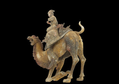 Extremely Rare Bactrian Camel (14)