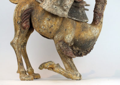 Extremely Rare Bactrian Camel (30)